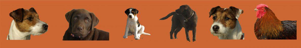 Parson Russell- und Labrador Zucht Patch Pride
